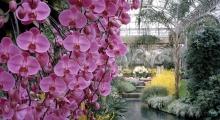blossoming individual